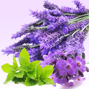 Powerful Fragrance Oils: Lavender Mint WOW Fragrance Oil