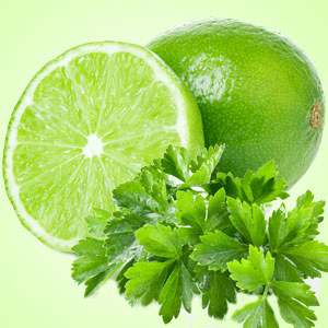 Lime Cilantro Fragrance Oil