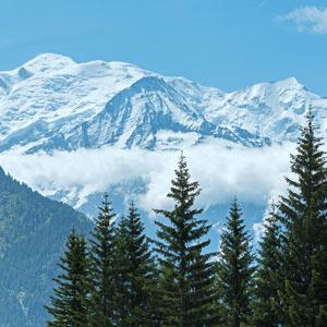 Frosted Peak Tops Fragrance Oil