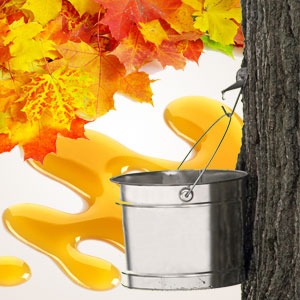 Maple Sugar Fragrance Oil
