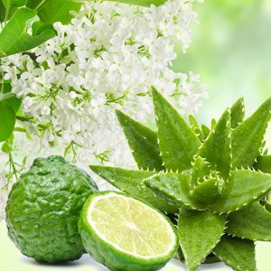 15 Best St. Patrick's Day Fragrance Oils NG Aloe & White Lilac