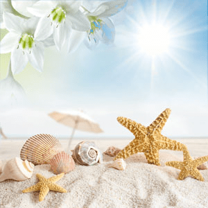 NG Sun Sand Type Fragrance Oil