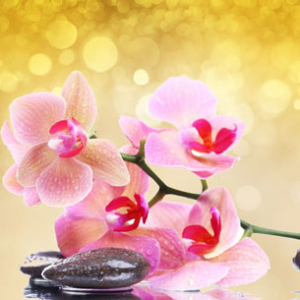 Pink Orchid & Amber Fragrance Oil