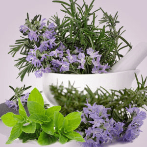 Rosemary Mint Type Fragrance Oil