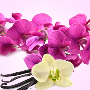 Sweet Pea Vanilla Fragrance Oil