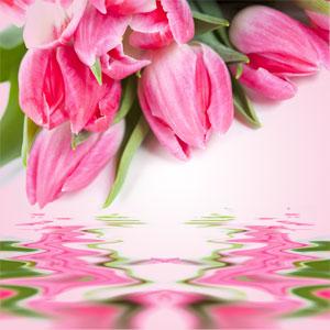 Scents of Spring: Tulip Fragrance Oil