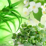 10 Ways to Use Chamomile: Chamomile Clay Soap Recipe Fragrance