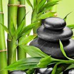 Fresh Bamboo Fragrance Oil