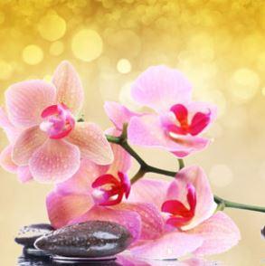 Best Floral Fragrance Oils Pink Orchid & Amber Fragrance Oil