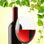 Cabernet Sauvignon Wine Fragrance Oil