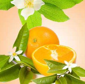 Best Floral Fragrance Oils Orange Blossom Fragrance Oil
