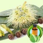 Best Essential Oil Blends Rejuvenating Foot Balm Recipe Eucalyptus