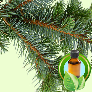 Top 25 Essential Oils Fir Needle Siberian Essential Oil