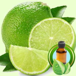 Lime Fragrance Oils for Scented Crafts: Lime Essential Oil