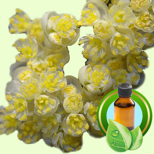 Top 25 Essential Oils Litsea Cubeba Essential Oil