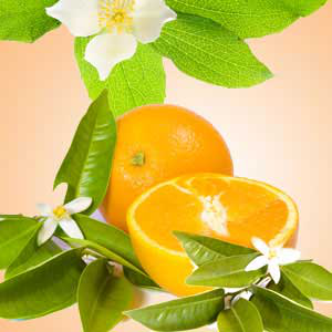 Strong Citrus Fragrance Oils Orange Blossom Fragrance Oil