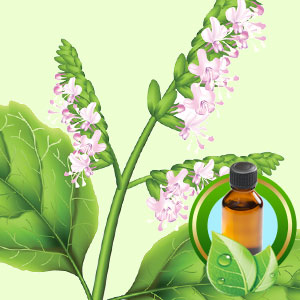 Top 25 Essential Oils Patchouli Essential Oil