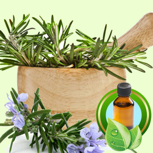 Top 25 Essential Oils Rosemary Tunisian Essential Oil