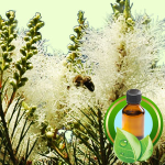 Best Essential Oil BlendsRejuvenating Foot Balm Recipe Tea Tree