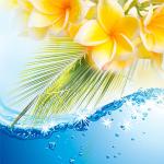 Top Exotic Fragrances: Awapuhi Seaberry Fragrance Oil