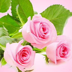 15 Best Valentine's Day Fragrances: Fresh Cut Roses Fragrance Oil