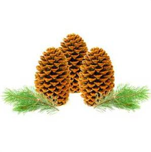 Candle Ideas for Christmas: Pinecone Firestarters Recipe
