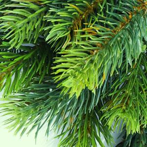 Best Christmas Fragrance Oils Balsam Fragrance Oil