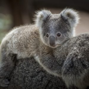 Eucalyptus Benefits: Food and Beverages