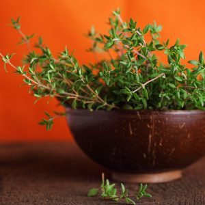 Thyme Uses: Medicinal Uses