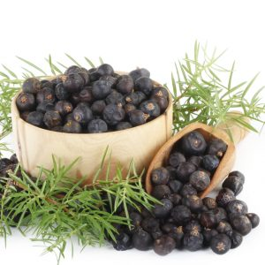Juniper Berry Benefits: Medicinal Uses for Juniper Berries