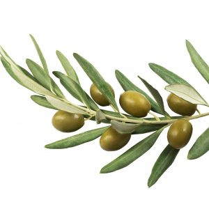 Olive Leaf Powder Benefits: Other Uses
