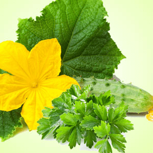 Fragrance Oils for Saint Patricks Day: Cucumber Wasabi Cilantro Fragrance Oil