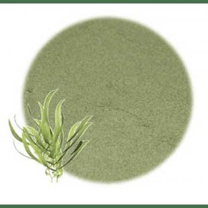 Moisturizing Herbs for Hair: Kelp Powdered Herb