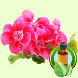 Natural Soap Making Supplies: Geranium Essential Oil