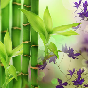 15 Fragrance Oils for St Pattys Day - Australian Bamboo Grass Fragrance Oil