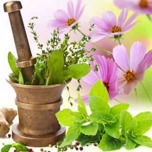 15 Fragrance Oils for St Pattys Day - Basil Sage Mint Fragrance Oil