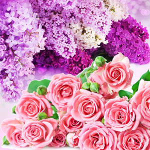 20 Floral Scents for Spring - NG Rose & Violet Type Fragrance Oil