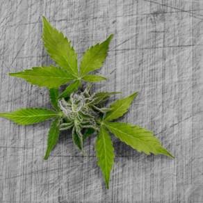 leaf-3065626_1920