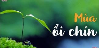 mua-oi-chin-van-hoc-tuoi-xanh