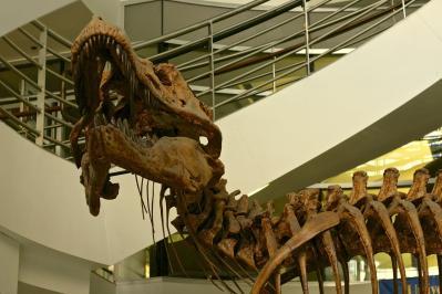 T. rex no primeiro andar do Valley Life Sciences Building