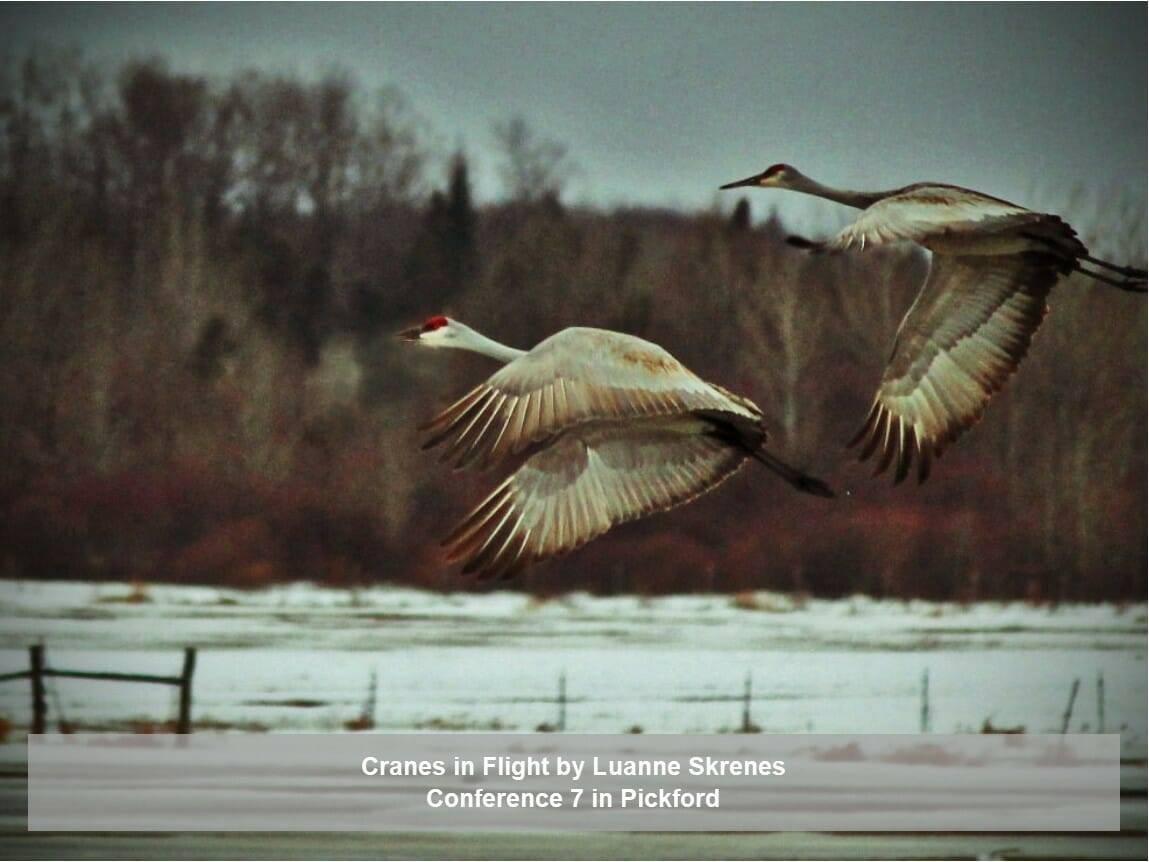 Cranes in flight by Luanne Skrenes
