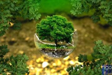 Житомирян запрошують долучитись до ЕКОакції «Зелені Легені» – весна 2017!