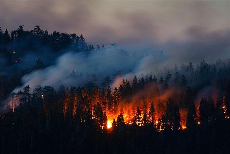 Программа «Тушение лесных пожаров силами студенческих отрядов»