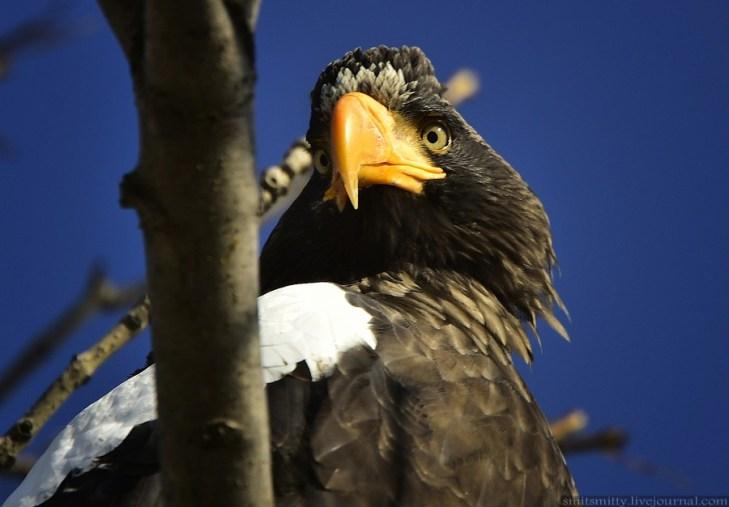 Программа сохранения исчезающих видов птиц Дальнего Востока