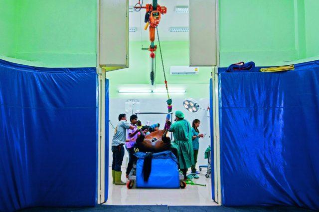ม้าแข่ง, แข่งม้า, สัตวแพทย์, โรงพยาบาลสัตว์