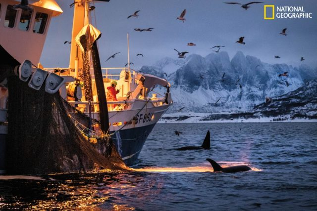 วาฬ, วาฬหัวทุย, เรือประมง