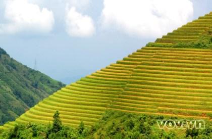 Ruong Bac Thang - Gao Sach Viet Nam - Gian Hang San Pham Tot -- 01