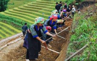 Ruong Bac Thang - Gao Sach Viet Nam - Gian Hang San Pham Tot -- 03