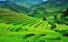 Ruong Bac Thang - Gao Sach Viet Nam - Gian Hang San Pham Tot -- 08