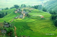 Ruong Bac Thang - Gao Sach Viet Nam - Gian Hang San Pham Tot -- 13